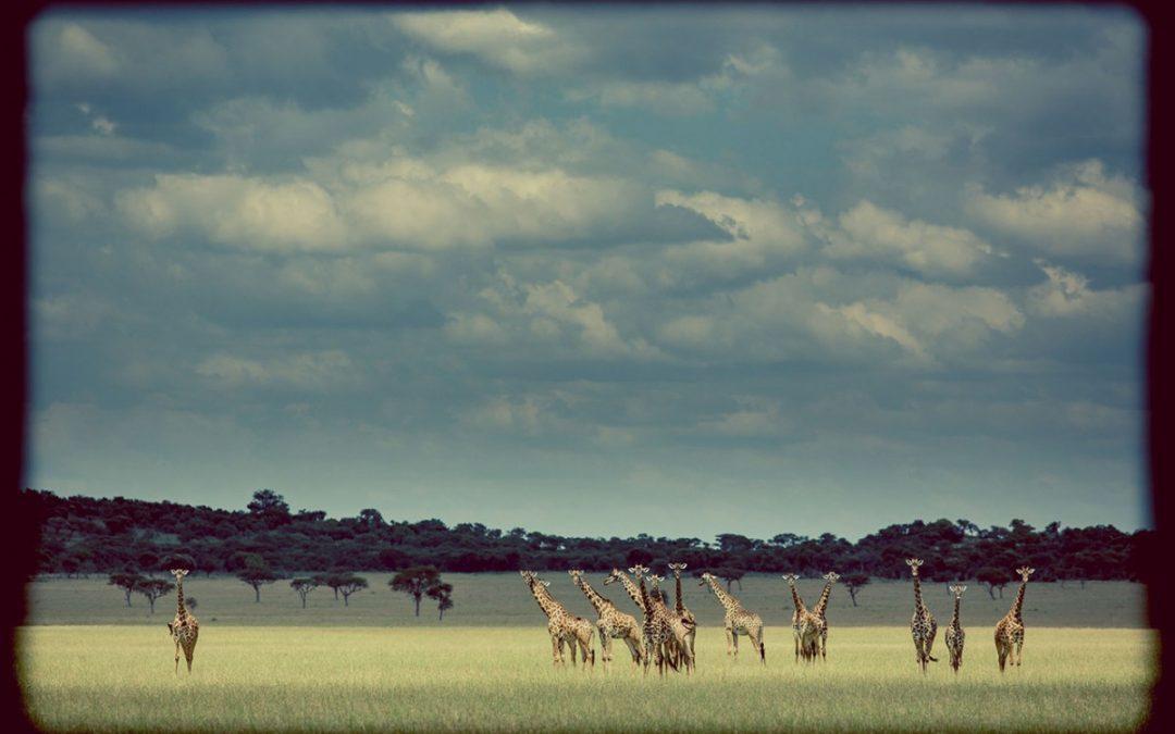 Singita Celebrates 15 Years of Successful Conservation in the Serengeti